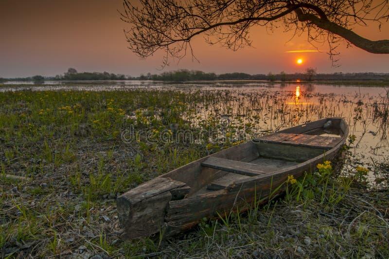 Soluppgånglandskap på den Biebrza nationalparken, Polen arkivbilder