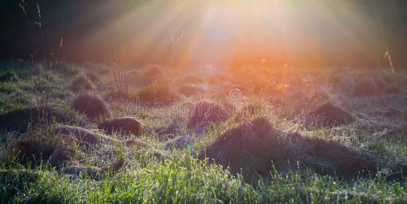 Soluppgångljus i ett fält arkivfoto
