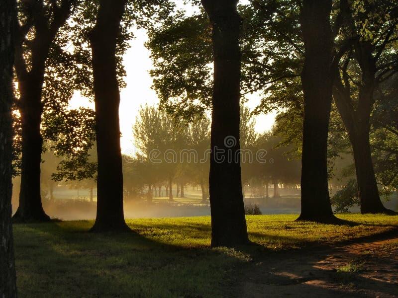 soluppgångtrees royaltyfria bilder