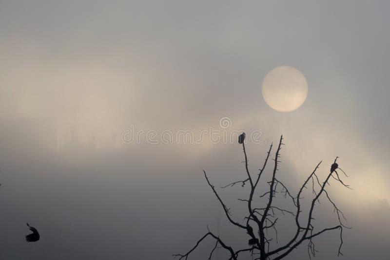 Soluppg?ng i Guatemala, tr?d med vr?k som av tar flyg Sol i misten arkivbild