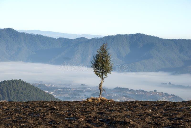Soluppg?ngberg odlade med pittoreska byar i lantliga Guatemala, mist och frost Central America arkivfoton