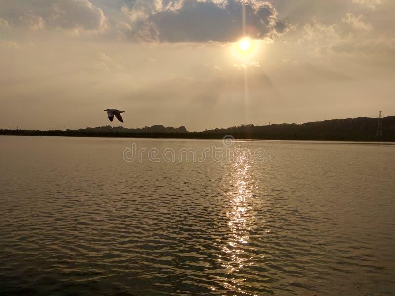 soluppsättning med floden och fågeln arkivfoton