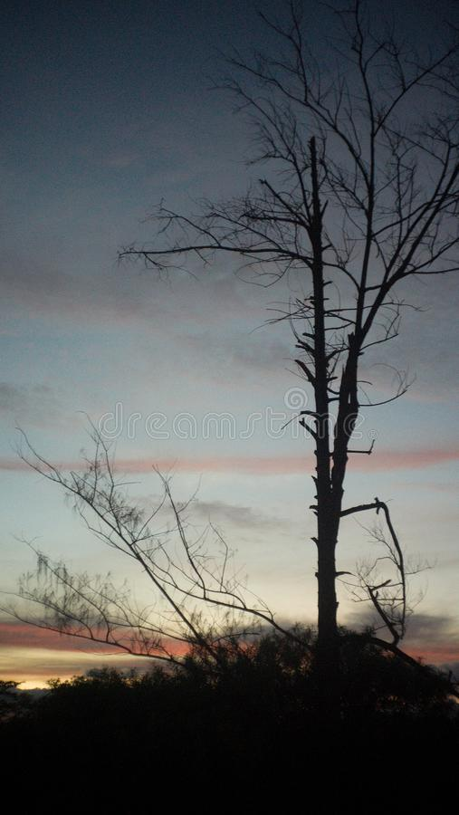 Soluppsättningar bak ett träd arkivfoto