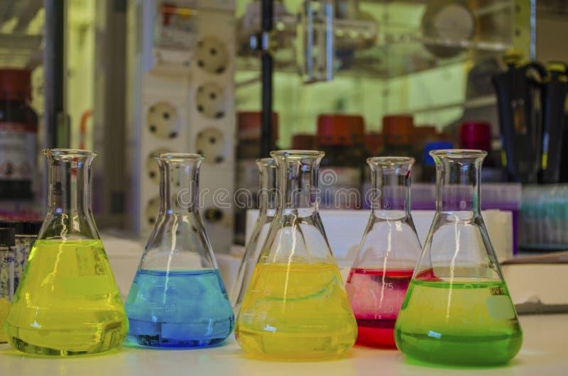 Solution color?e diff?rente dans la fiole conique dans un laboratoire de chimie avec la photographie d'exp?rience de chimie organ photos libres de droits