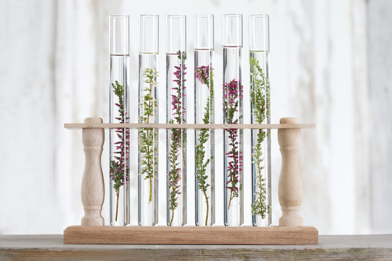 solution of medicinal plants and flowers - Decorative Objects-plants in test tubes - concept of similarity stock photo