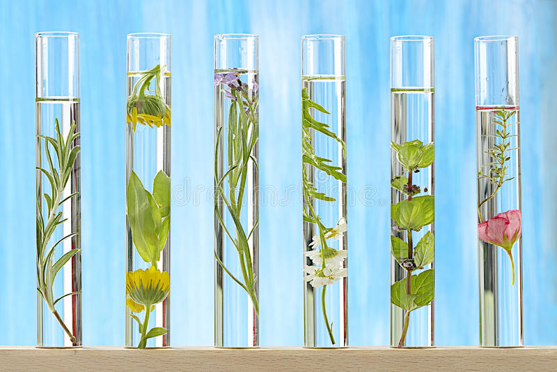 Soluzione di pianta medicinale e di fiori fotografia stock libera da diritti