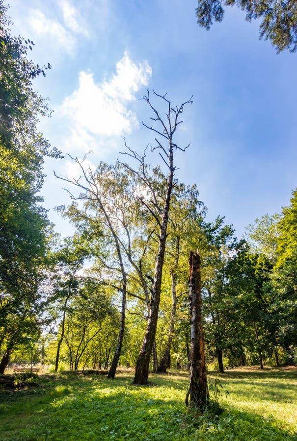 Solvay Park, Krakow, Poland royalty free stock images