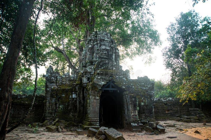 Som de Ta Árvores com raizes nas paredes angkor cambodia imagens de stock