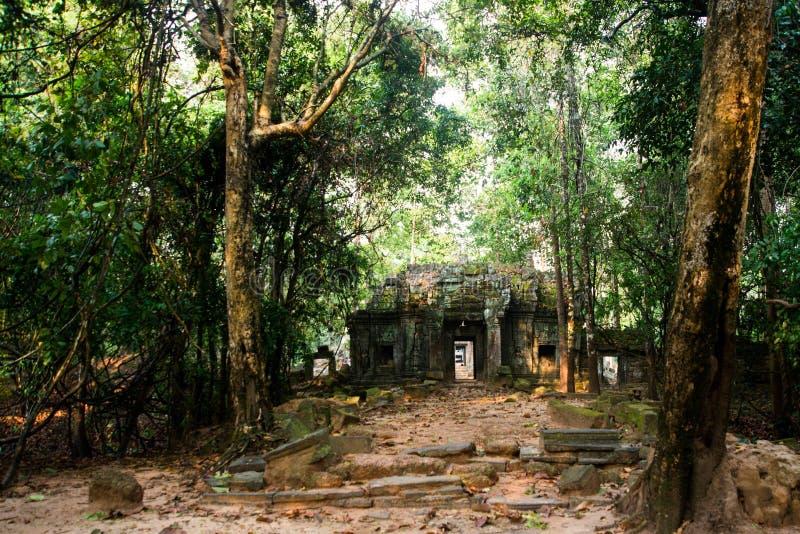Som de Ta Árvores com raizes nas paredes angkor cambodia foto de stock