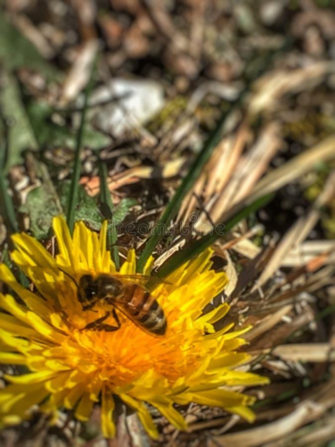 som det upptagna biet arkivbild