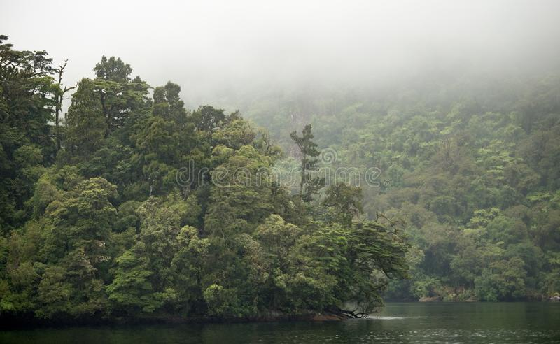 Som duvidoso, ilha sul, Nova Zelândia fotografia de stock