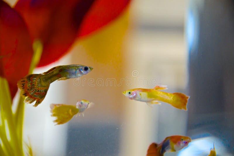 Som en fisk i vattnet arkivfoton