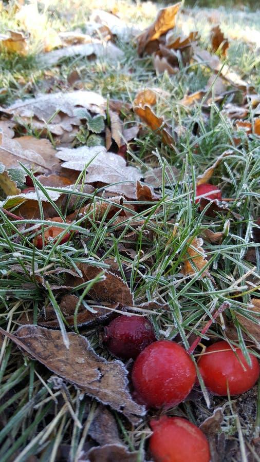 som härliga görande november för mistmorgonen nicely skinande sun silhuettes trees arkivfoto