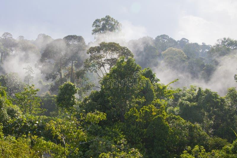 Morgon upptill av en tropisk molnskog arkivfoton