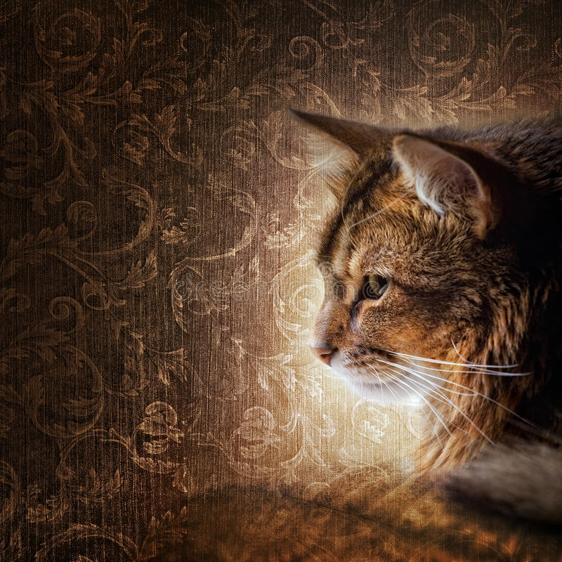 Download Somali cat portrait stock image. Image of brown, profile - 17117703
