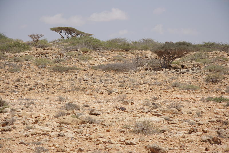 Somalia ist ein Land von Piraten stockbilder
