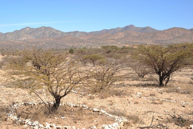 Somalijski ladscape zdjęcie stock