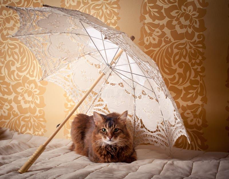 Somalisch kattenportret royalty-vrije stock foto's