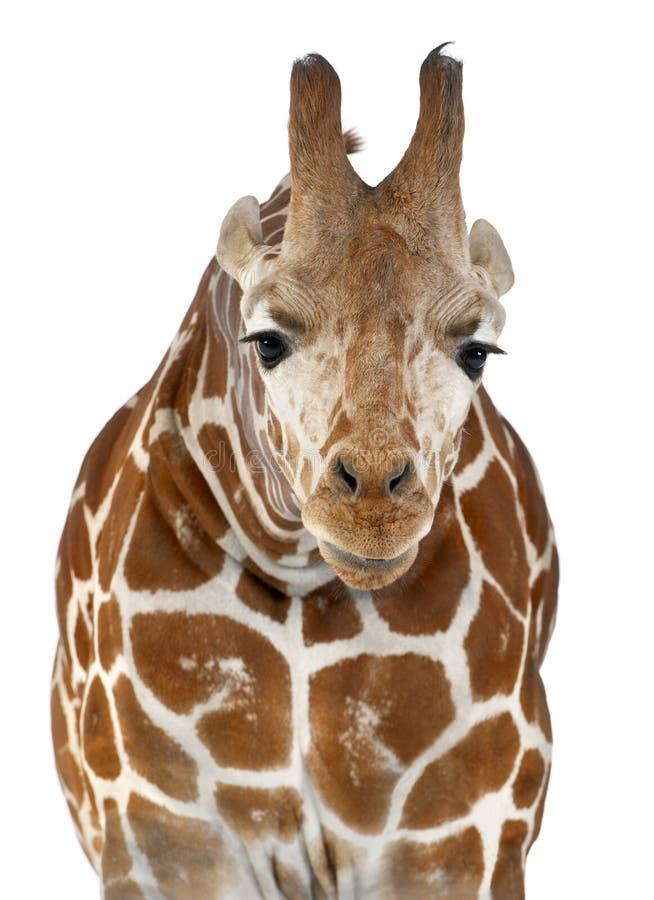 Somalische Giraf stock foto's