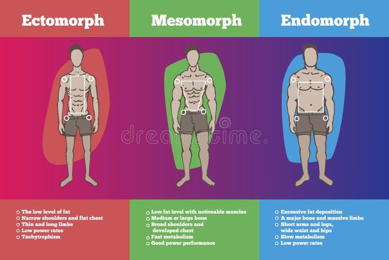 Somatotypes do corpo dos homens ilustração royalty free