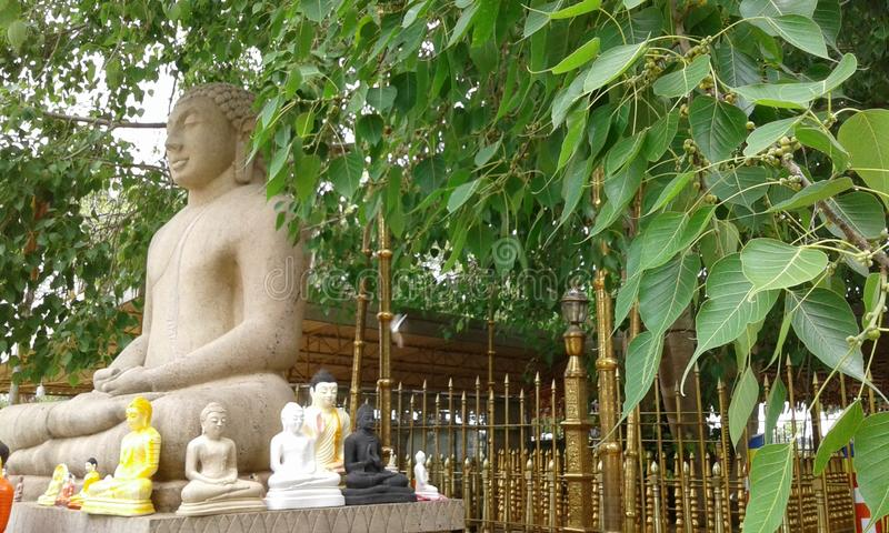 Somawathiya Samadhi雕象波隆纳鲁沃,斯里兰卡 库存图片