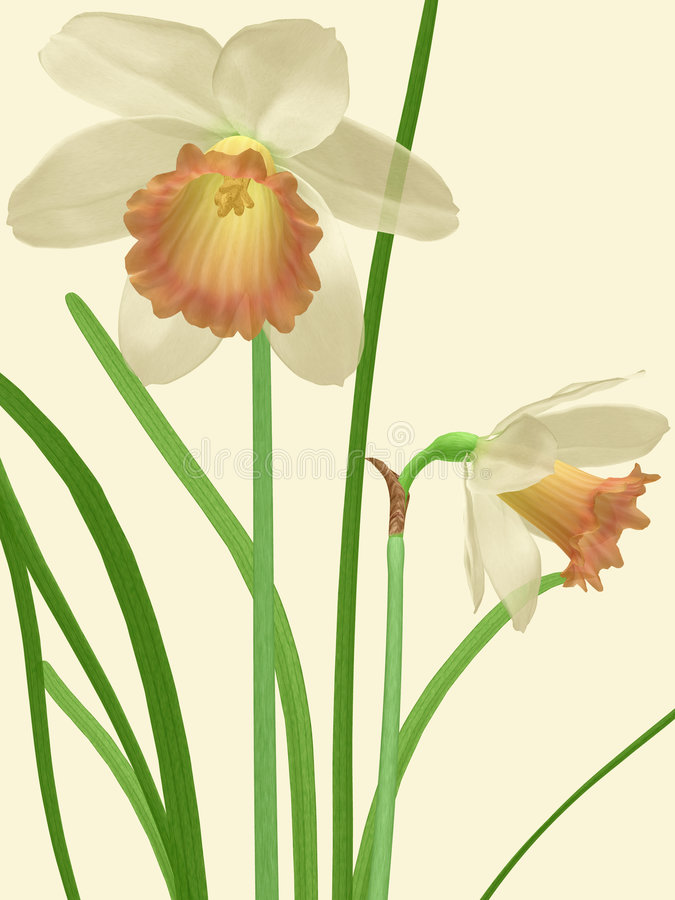 Somber Daffodils vector illustration