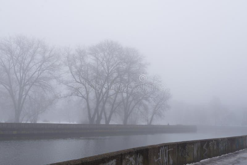 Sombere bomen dichtbij de rivier in de ochtendmist royalty-vrije stock foto's
