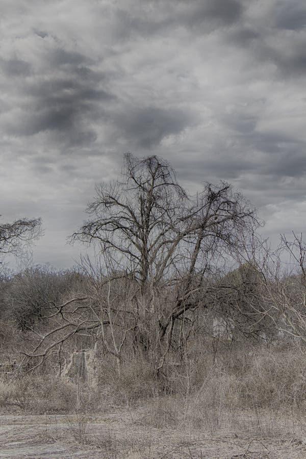Sombere boom op een dood gebied stock foto