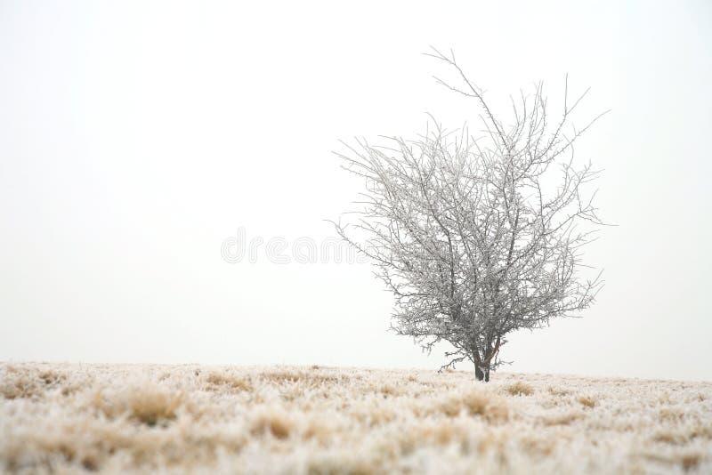 Sombere de winterdag stock fotografie