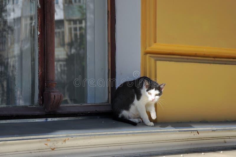 Sombere kat stock foto's