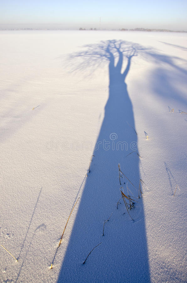 Sombra azul bonita da árvore do inverno na neve foto de stock