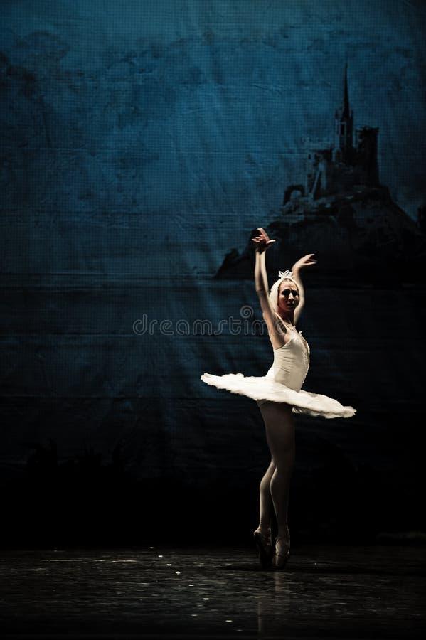 Sombra branca da cisne foto de stock royalty free