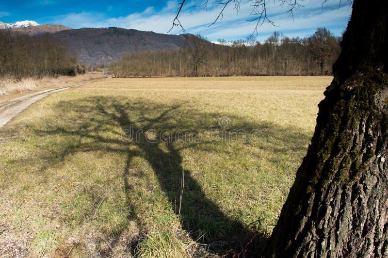 Sombra da árvore na paisagem invernal foto de stock