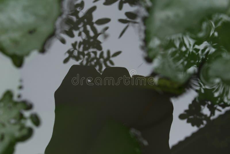 Sombra da câmera na água foto de stock royalty free