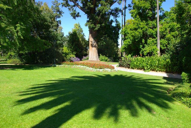 Sombra da palmeira fotografia de stock royalty free