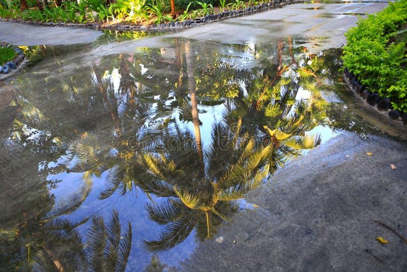 Sombra da palmeira na poça da água azul após a chuva foto de stock royalty free