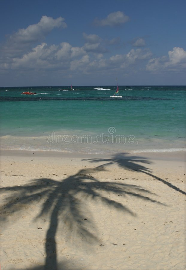 Sombra da palmeira na praia fotografia de stock