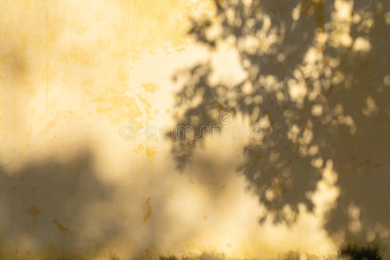 Sombra da ?rvore na parede imagem de stock
