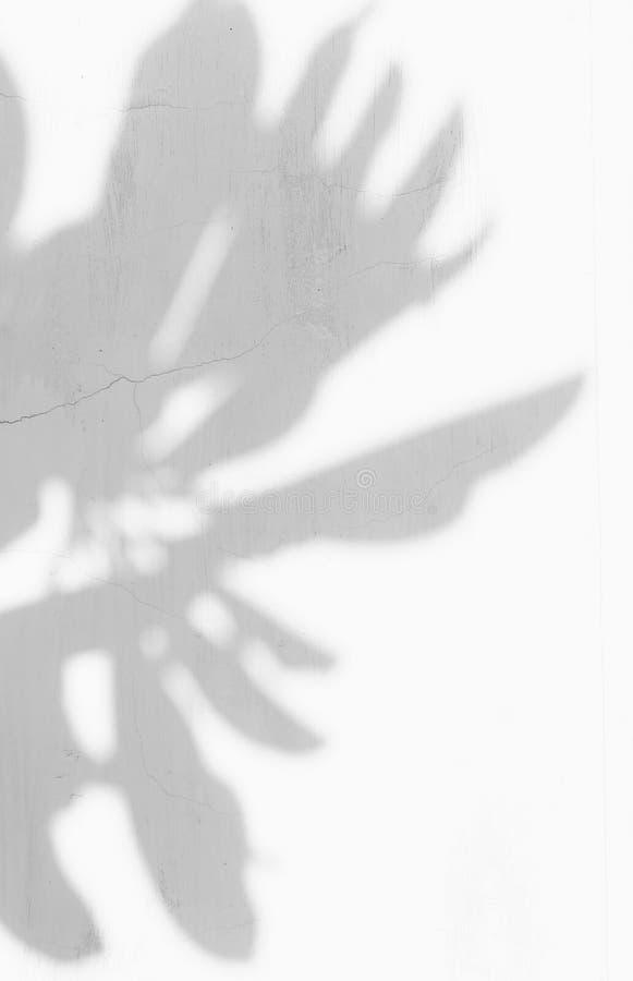 Sombra das folhas fotografia de stock