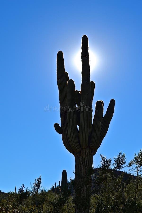 Sombra de Arizona fotografía de archivo libre de regalías