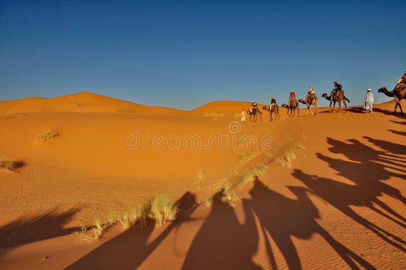 Sombra de camellos en el desierto de Merzouga foto de archivo