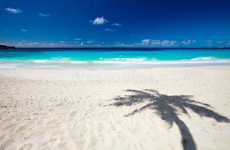 Sombra de la palmera en la arena imágenes de archivo libres de regalías