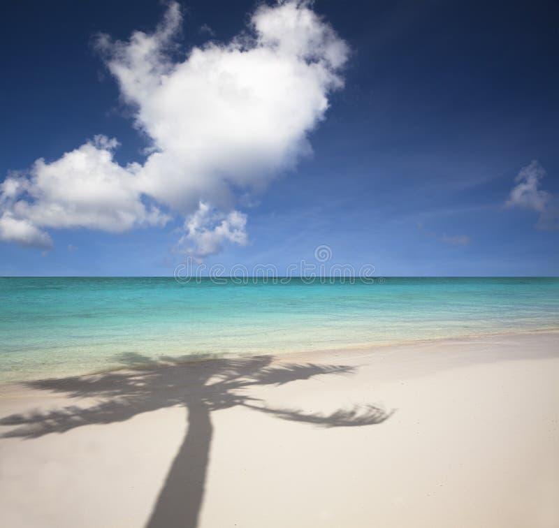 sombra de la playa y de la palmera imagen de archivo libre de regalías
