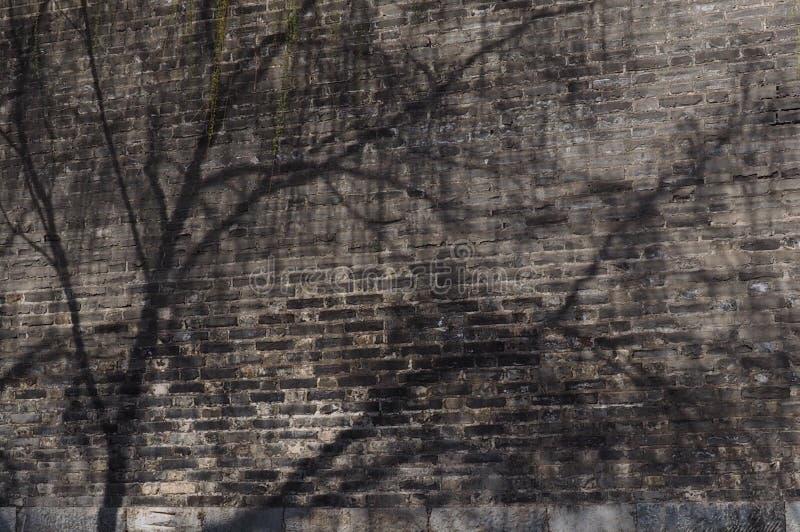 Sombra de la primavera imagen de archivo libre de regalías