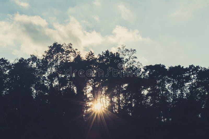 Sombra de la silueta de la oscuridad del paso de la iluminación de la sol del bosque foto de archivo libre de regalías