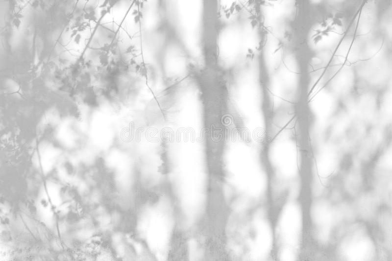 Sombra de las hojas reflejadas en la pared blanca fotografía de archivo