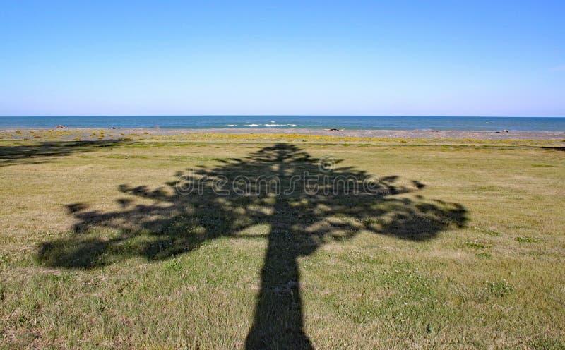 Sombra de pontos de uma árvore ao mar em Napier na ilha norte, Nova Zelândia imagem de stock royalty free