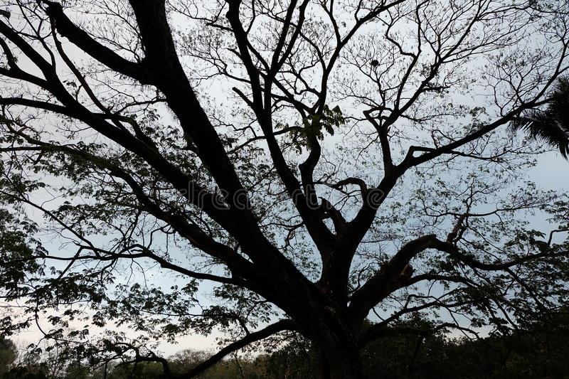 Sombra de ramos de árvore foto de stock royalty free