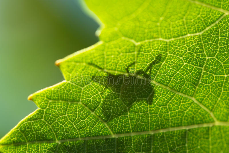 Sombra de uma mosca fotografia de stock royalty free