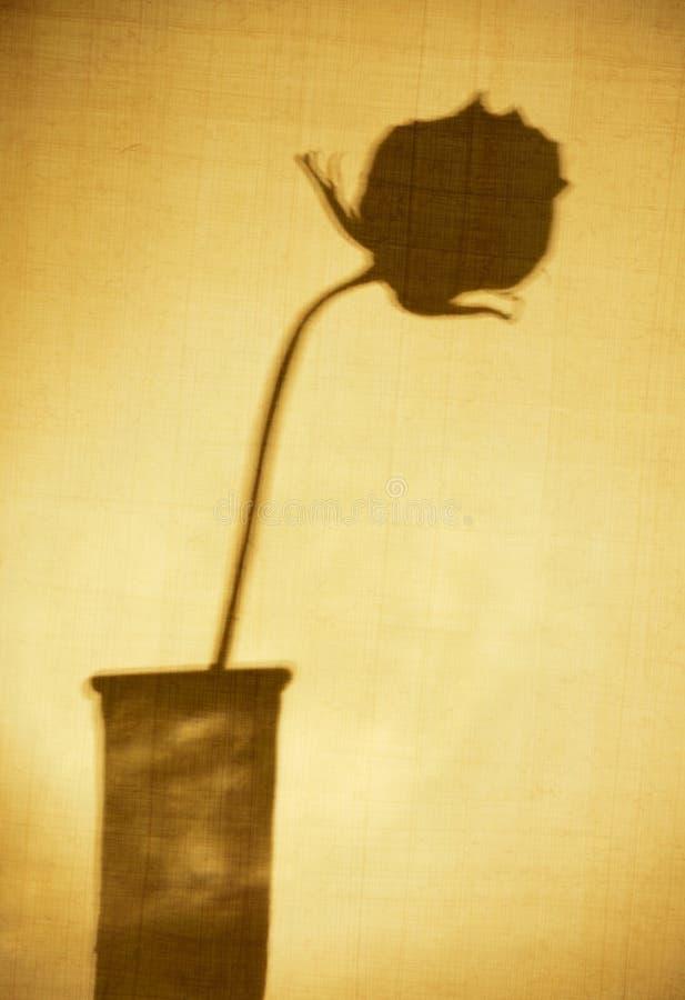 Sombra de uma Rosa fotografia de stock